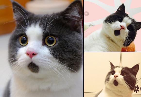 驚訝貓Banye1