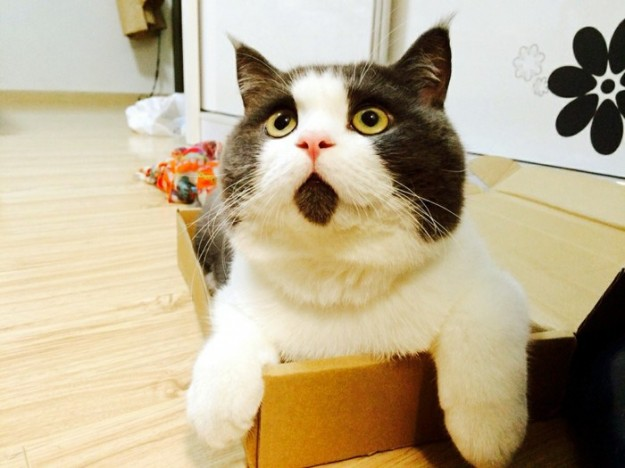 驚訝貓Banye2