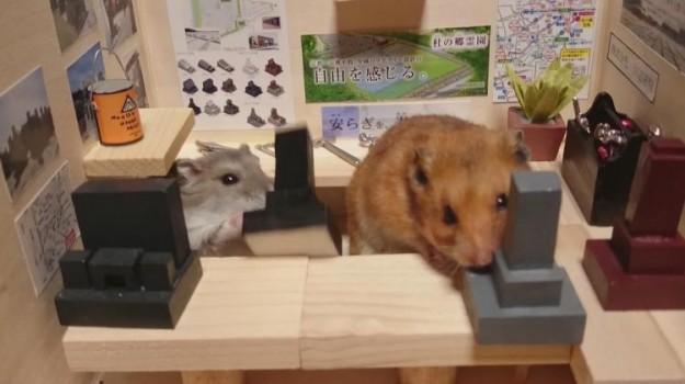 倉鼠酒館6