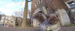 松鼠謀殺GoPro