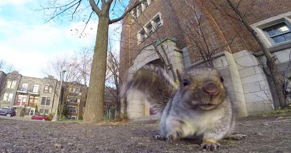 松鼠撿起攝影機、帶到樹上,然後做了一件很白目的事
