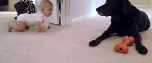 狗狗獎勵寶寶