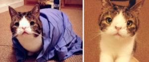 貓咪monty
