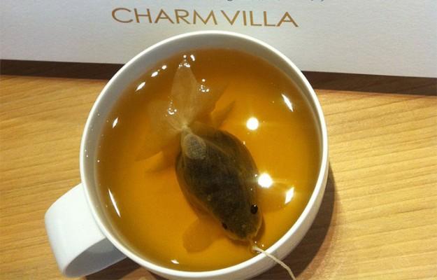 金魚茶包4