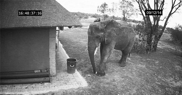 大象剪垃圾
