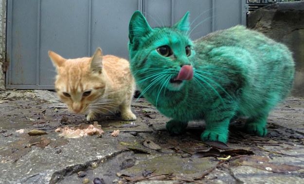 綠色貓咪1
