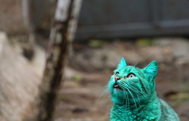 綠色貓咪3