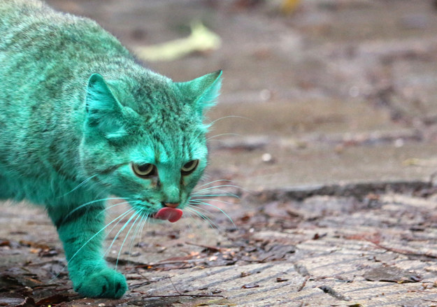綠色貓咪5