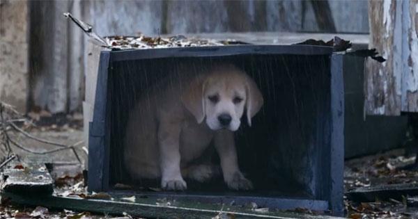 """衛生紙有幾包準備幾包,""""失蹤的狗""""是一分鐘的催淚彈"""