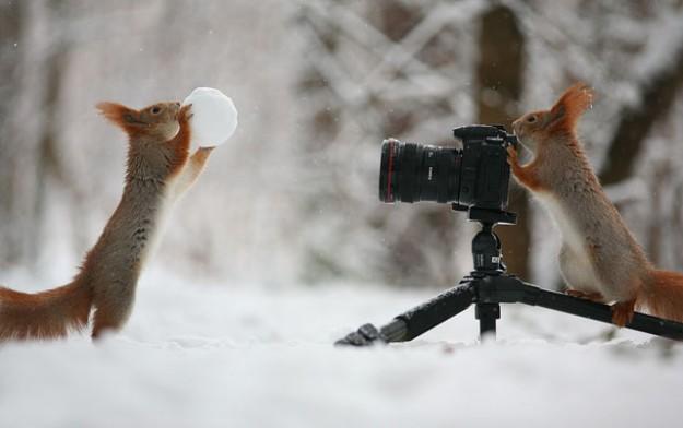 松鼠雪戰1