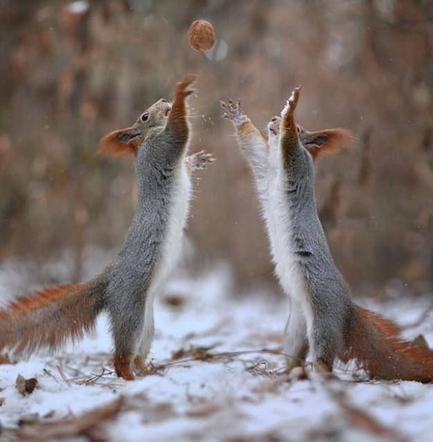 松鼠雪戰10