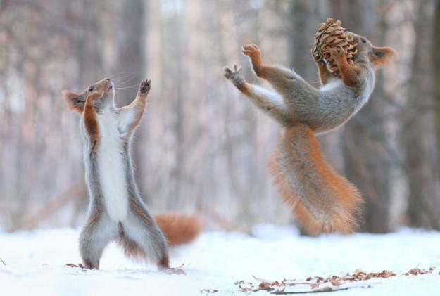松鼠雪戰11