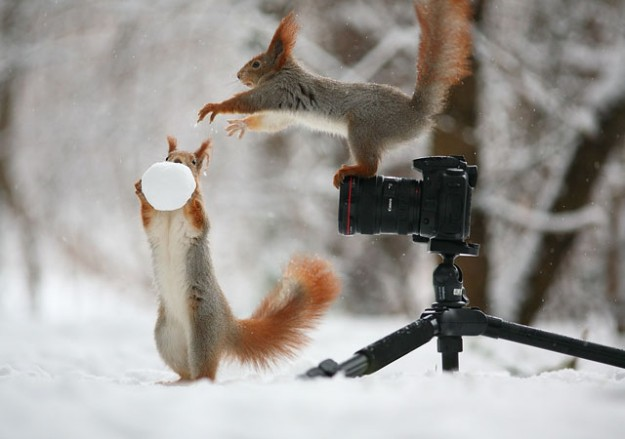 松鼠雪戰2