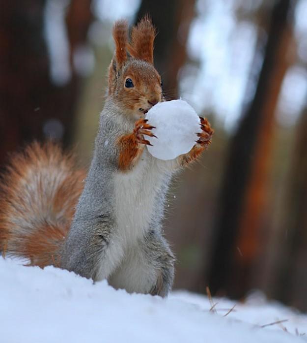 松鼠雪戰5