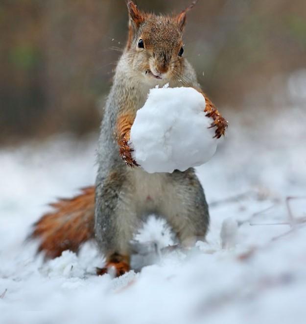 松鼠雪戰6