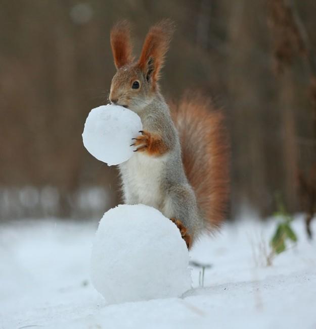 松鼠雪戰7