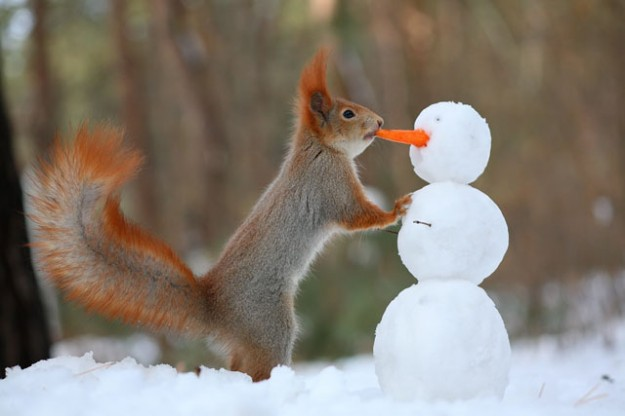 松鼠雪戰8