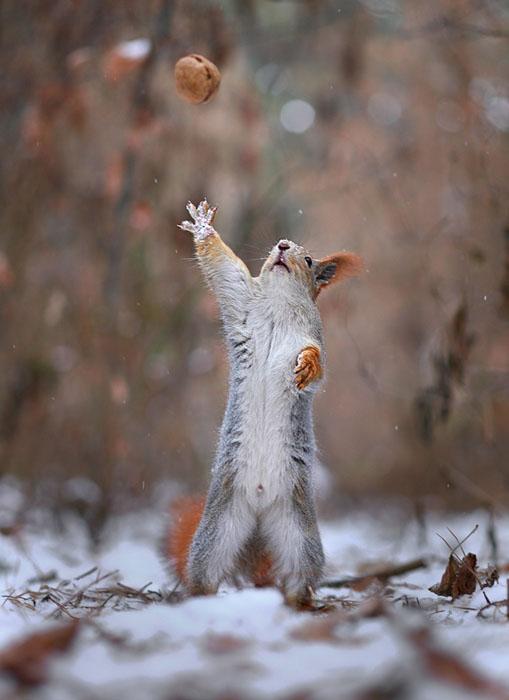 松鼠雪戰9