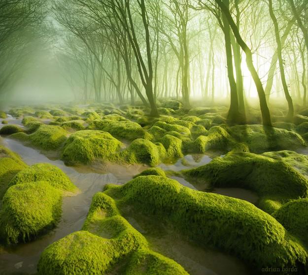 神秘森林1