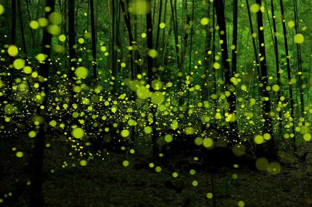 神秘森林10