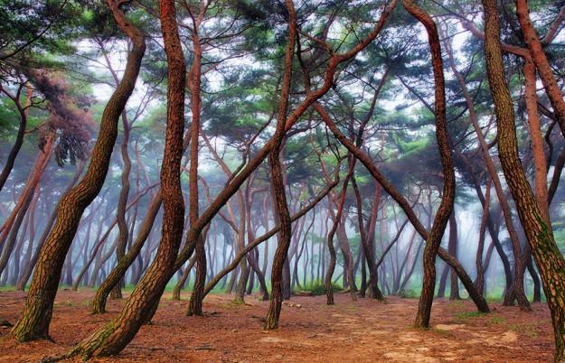 神秘森林11