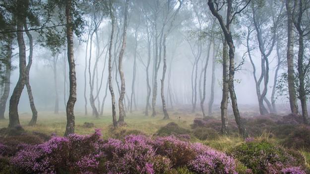 神秘森林12