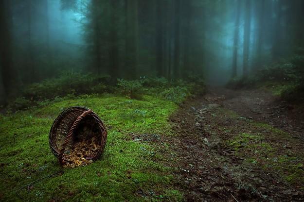 神秘森林13