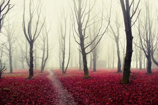 神秘森林14