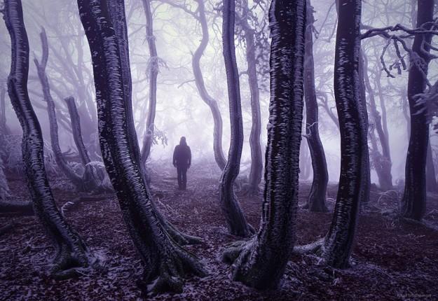 神秘森林15