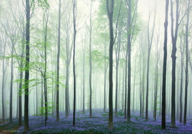 神秘森林16