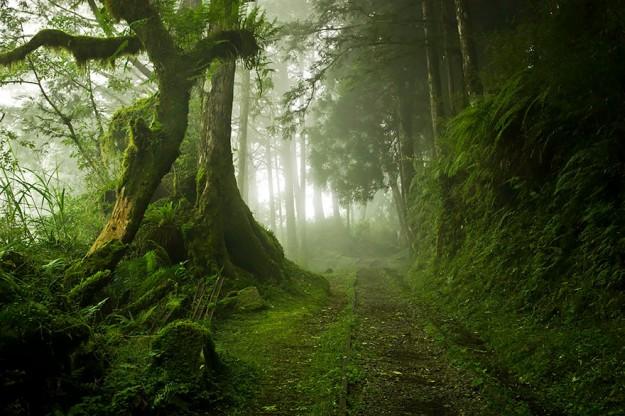 神秘森林17