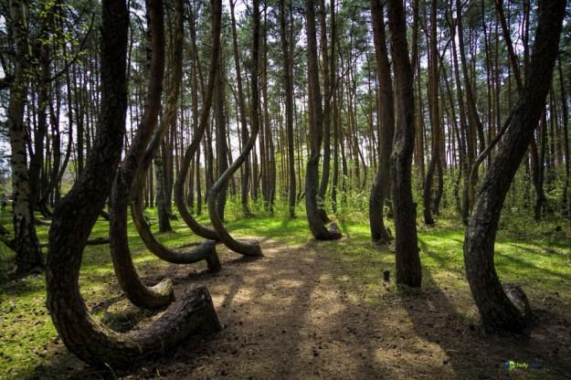 神秘森林18