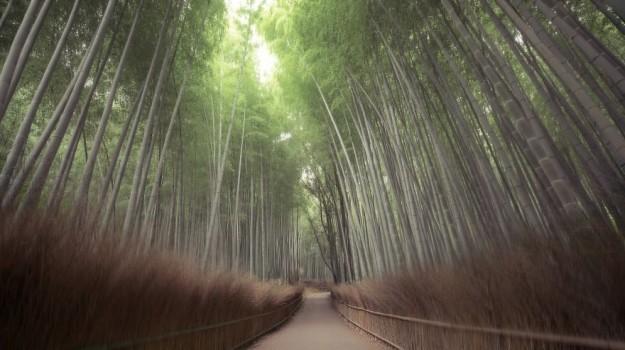 神秘森林19