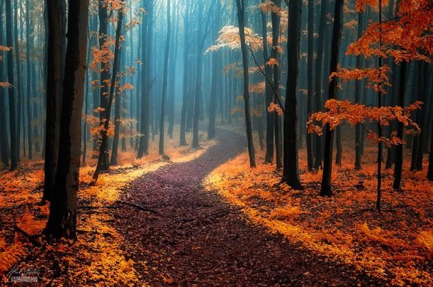 神秘森林3