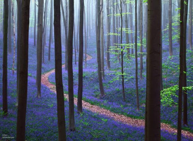 神秘森林4