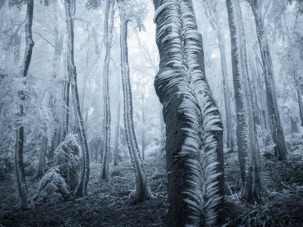 神秘森林5