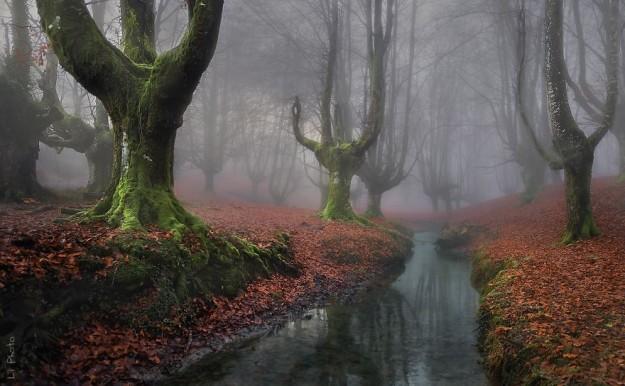 神秘森林6