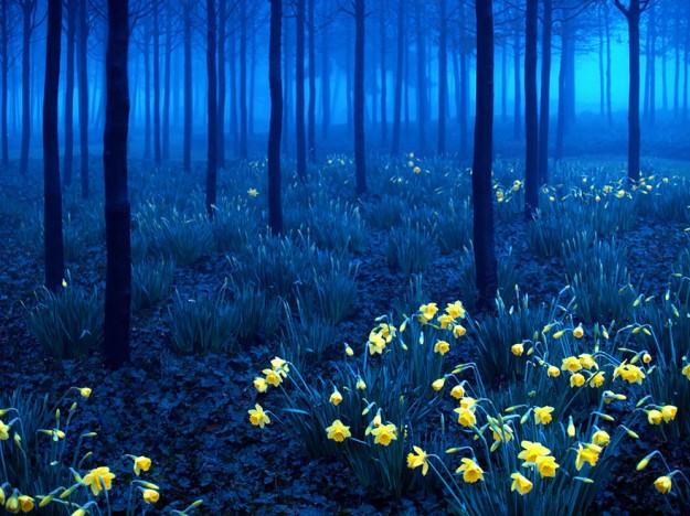 神秘森林7