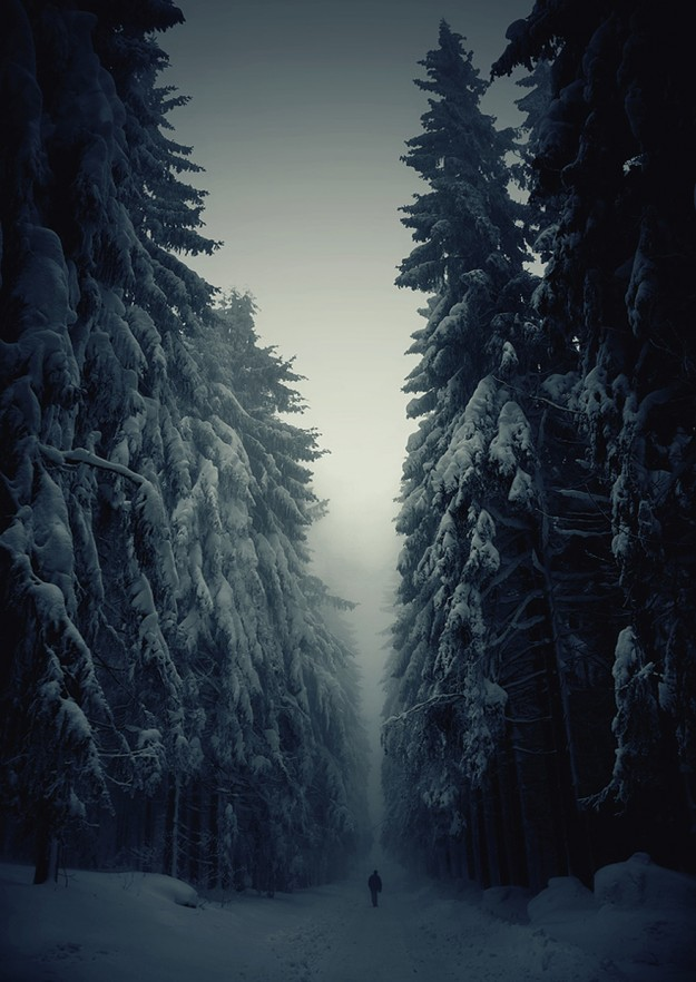 神秘森林8