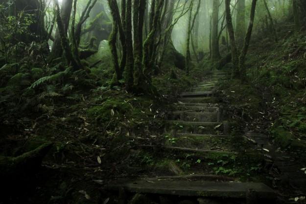 神秘森林9