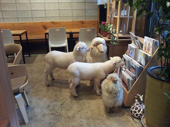 羊咩咩咖啡5