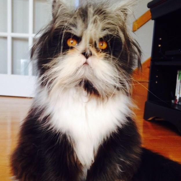 貓咪Atchoum1