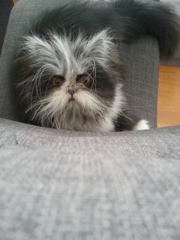 貓咪Atchoum9