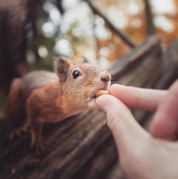 餵食動物2