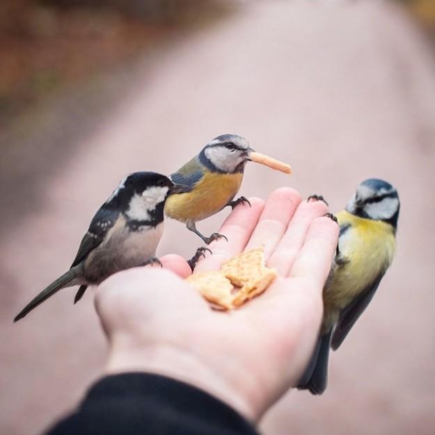 餵食動物9