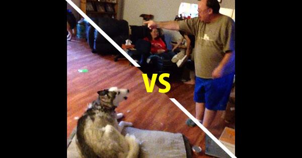 哈士奇偷吃東西被主人抓包,展開激烈人狗辯論