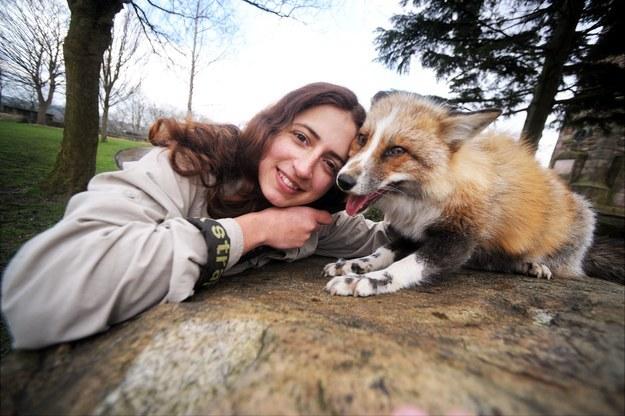 狐狸todd1