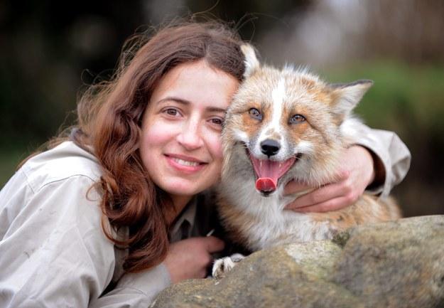 狐狸todd2