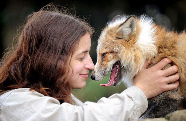 狐狸todd4