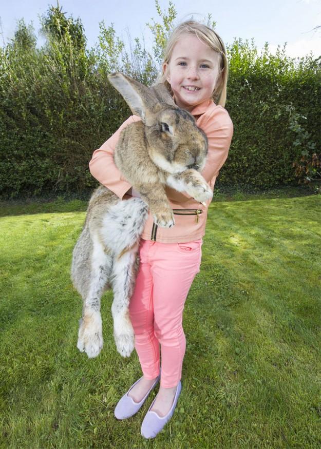 世界最大兔3